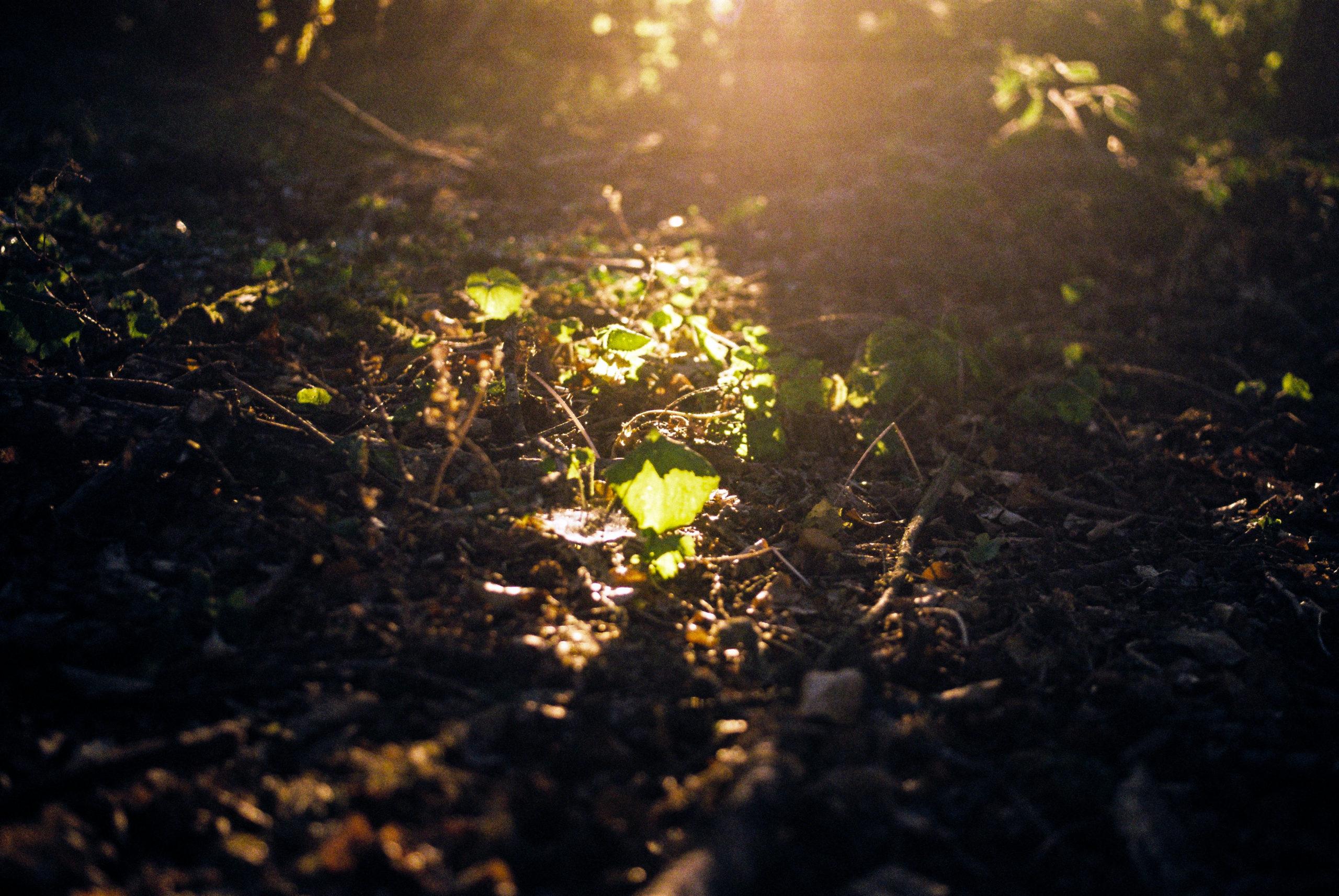 sunlight-on-the-forest-floor-P9DPT9N